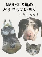 MAREX犬達の紹介